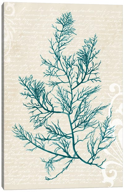 Teal Seaweed I Canvas Art Print