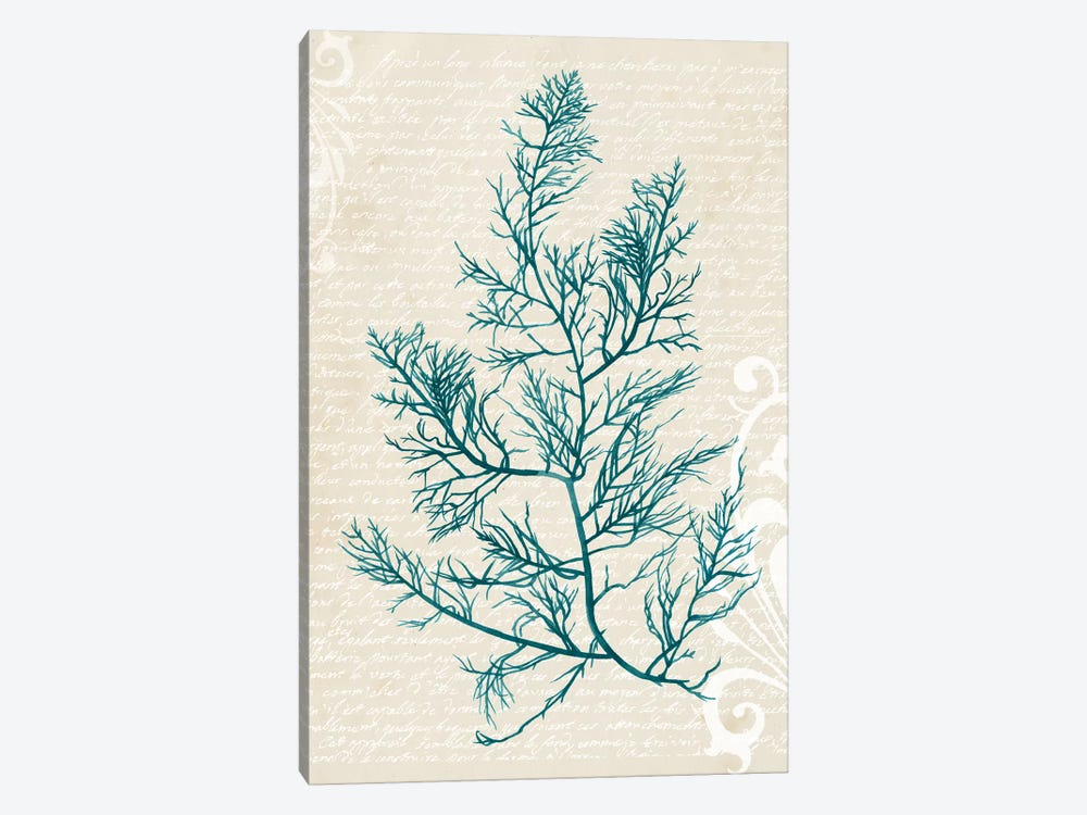 Teal Seaweed I by Grace Popp 1-piece Canvas Wall Art