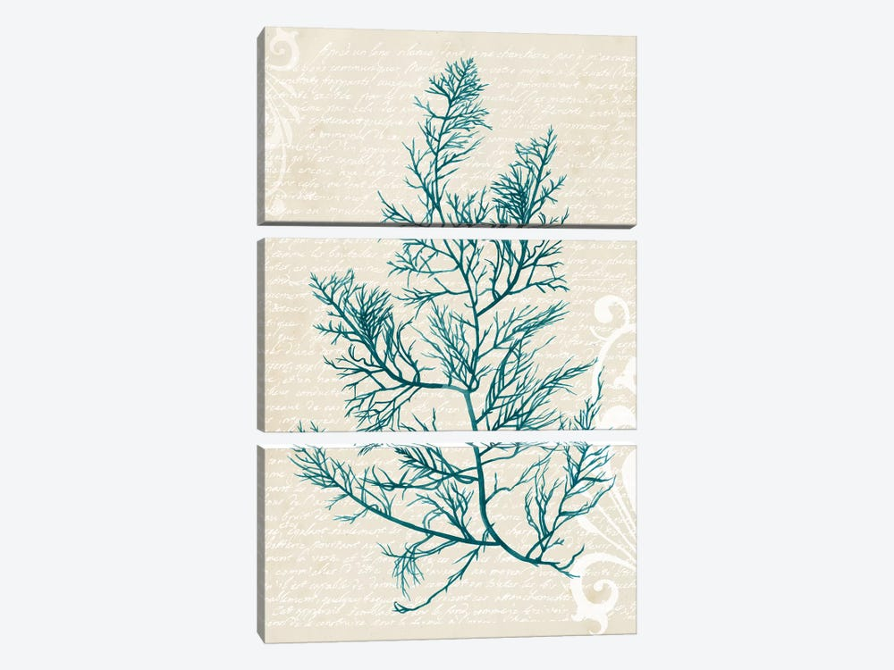 Teal Seaweed I by Grace Popp 3-piece Canvas Artwork