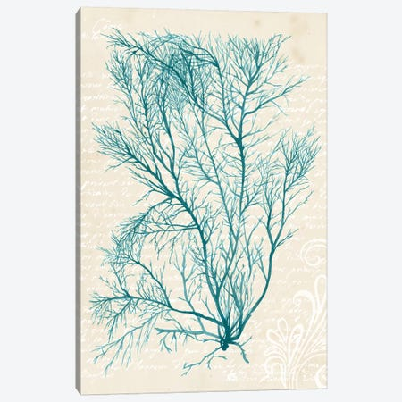 Teal Seaweed II Canvas Print #POP383} by Grace Popp Art Print