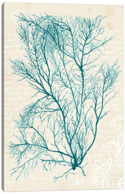 Teal Seaweed II Canvas Art Print