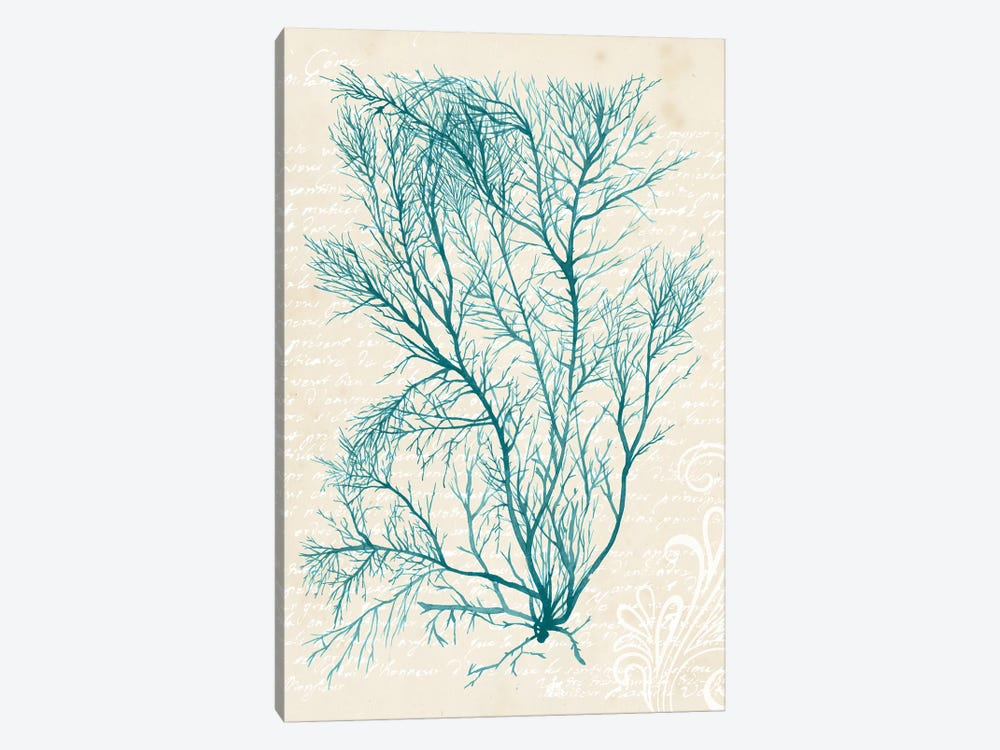 Teal Seaweed II 1-piece Canvas Print