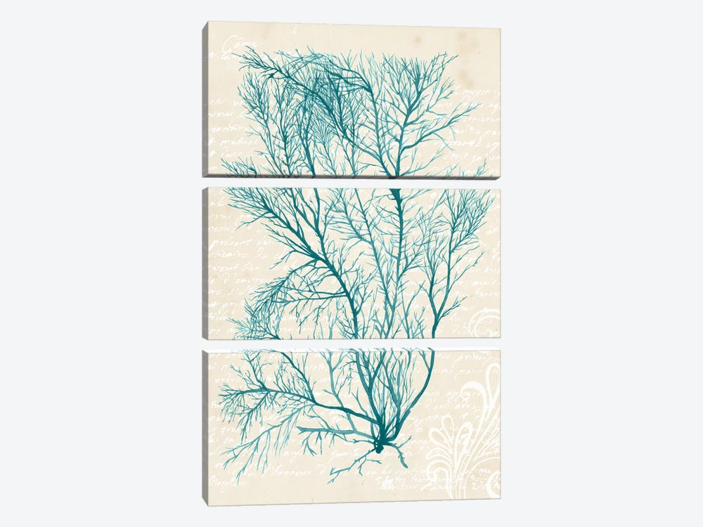 Teal Seaweed II by Grace Popp 3-piece Art Print