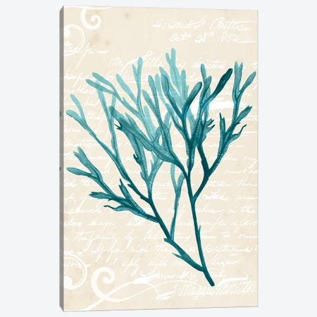 Teal Seaweed III Canvas Print #POP384} by Grace Popp Canvas Wall Art