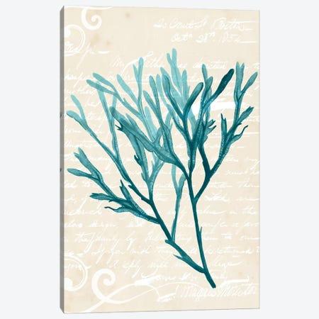 Teal Seaweed III Canvas Print #POP384} by Grace Popp Canvas Wall Art