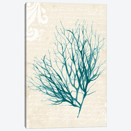 Teal Seaweed IV Canvas Print #POP385} by Grace Popp Canvas Artwork