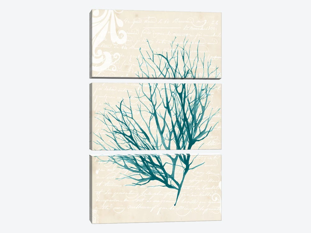 Teal Seaweed IV by Grace Popp 3-piece Canvas Art Print