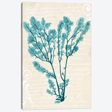 Teal Seaweed V Canvas Print #POP386} by Grace Popp Canvas Wall Art
