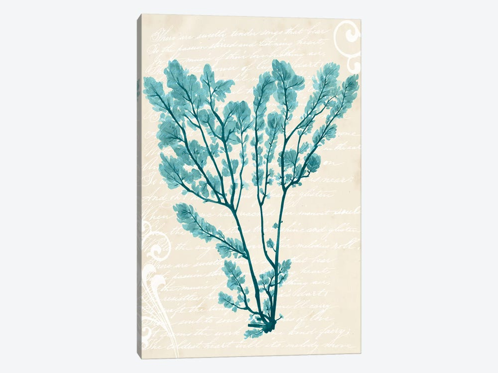 Teal Seaweed V by Grace Popp 1-piece Canvas Artwork