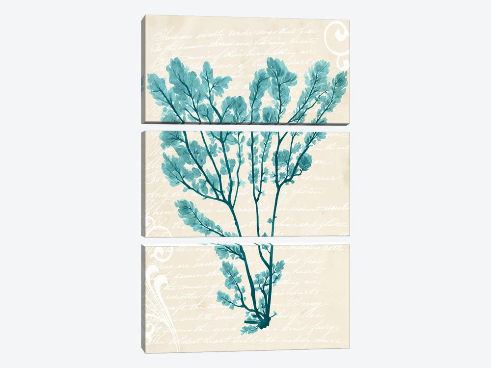Teal Seaweed V by Grace Popp 3-piece Canvas Wall Art