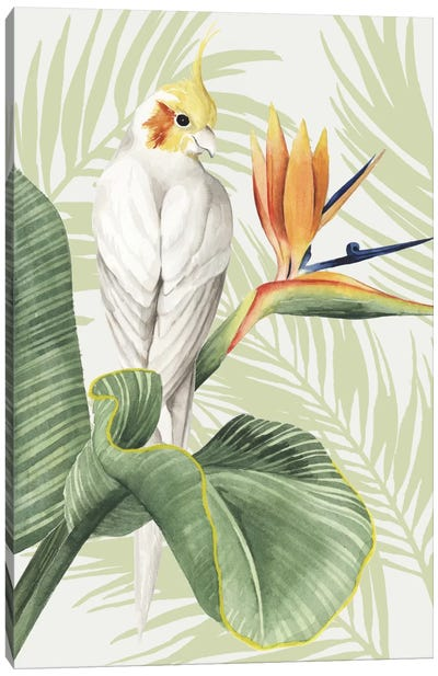 Avian Paradise II Canvas Art Print