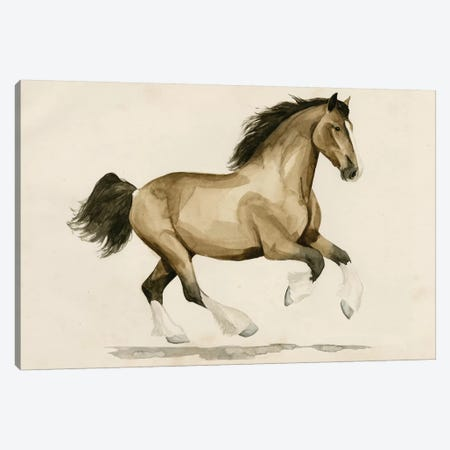 Clydesdale I Canvas Print #POP419} by Grace Popp Canvas Print
