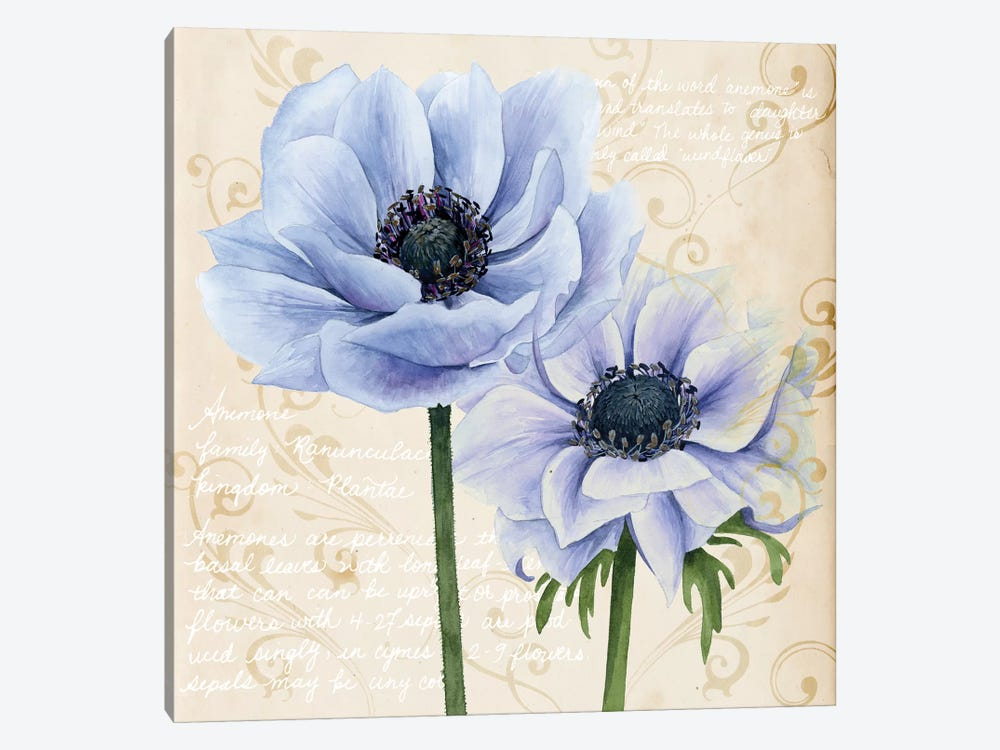 Elegant Anemone I by Grace Popp 1-piece Canvas Art