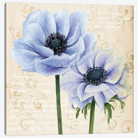 Elegant Anemone I Canvas Print #POP423} by Grace Popp Canvas Wall Art