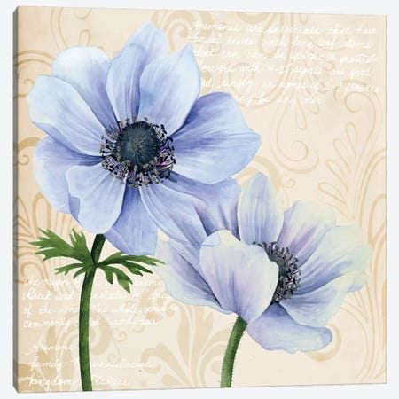 Elegant Anemone II Canvas Print #POP424} by Grace Popp Canvas Art Print