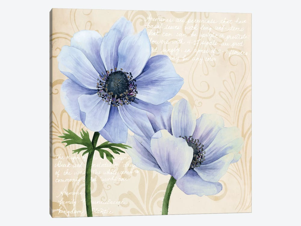 Elegant Anemone II by Grace Popp 1-piece Canvas Print
