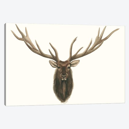 Elk Bust Canvas Print #POP425} by Grace Popp Canvas Print