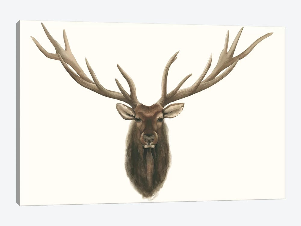Elk Bust by Grace Popp 1-piece Canvas Wall Art