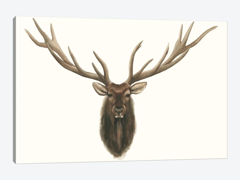 Elk Bust by Grace Popp 1-piece Canvas Wall Art