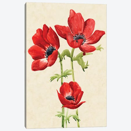 Heirloom Anemones I Canvas Print #POP428} by Grace Popp Canvas Artwork
