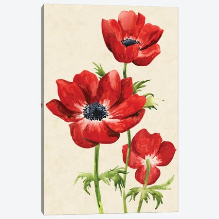 Heirloom Anemones II Canvas Print #POP429} by Grace Popp Canvas Wall Art