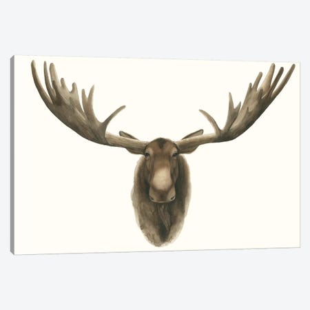 Moose Bust Canvas Print #POP430} by Grace Popp Canvas Art Print