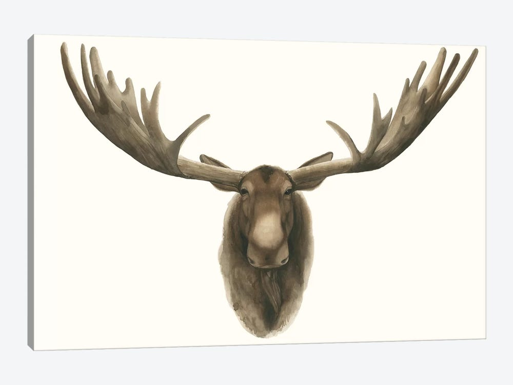 Moose Bust by Grace Popp 1-piece Canvas Art