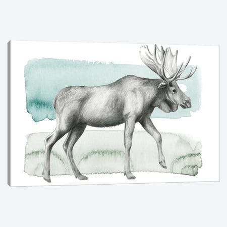 Animale III Canvas Print #POP451} by Grace Popp Canvas Print