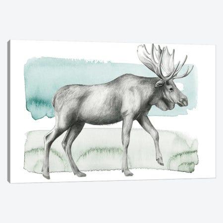 Animale III Canvas Print #POP451} by Grace Popp Canvas Print