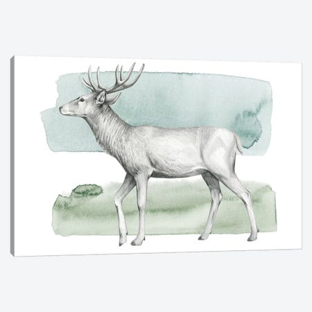 Animale IV Canvas Print #POP452} by Grace Popp Canvas Print