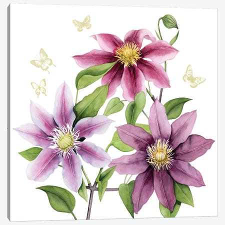 Clematis Climb II Canvas Print #POP487} by Grace Popp Art Print