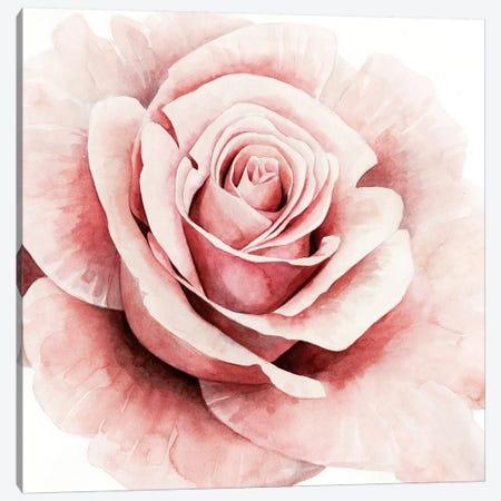 Pink Rose I Canvas Print #POP538} by Grace Popp Canvas Wall Art