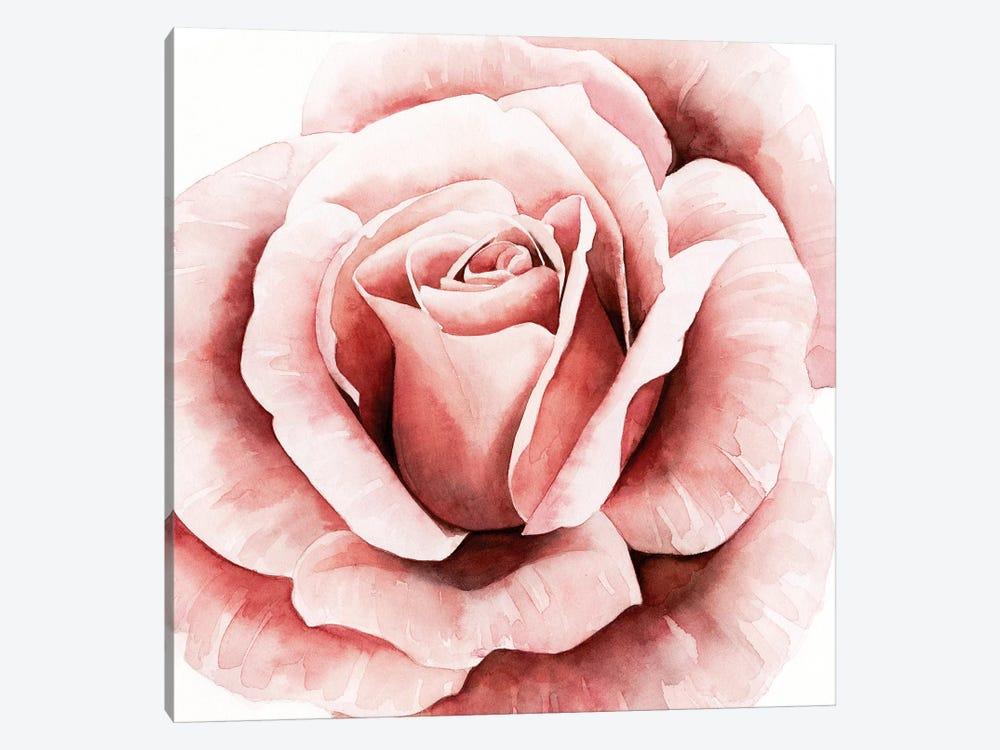 Pink Rose II by Grace Popp 1-piece Canvas Wall Art
