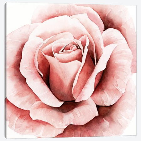 Pink Rose II Canvas Print #POP539} by Grace Popp Canvas Artwork
