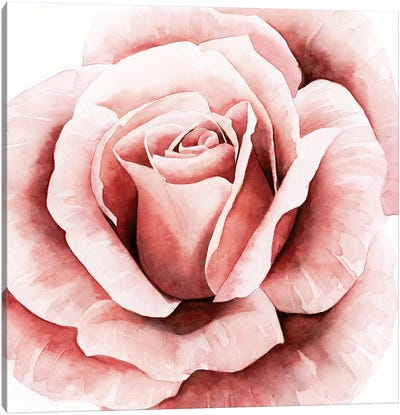 Pink Rose II Canvas Art Print