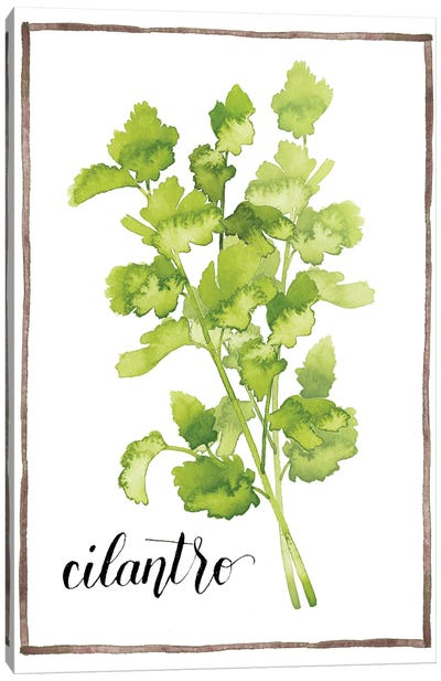 Watercolor Herbs IV Canvas Art Print