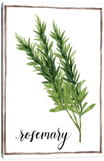 Watercolor Herbs V Canvas Art Print