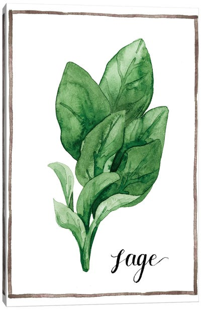 Watercolor Herbs VI Canvas Art Print