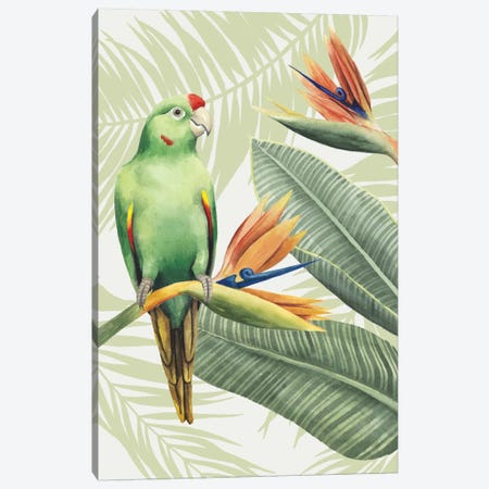 Avian Paradise IV Canvas Print #POP5} by Grace Popp Canvas Art Print