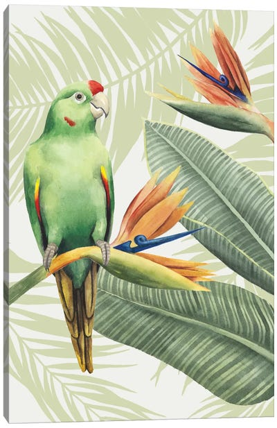 Avian Paradise IV Canvas Art Print