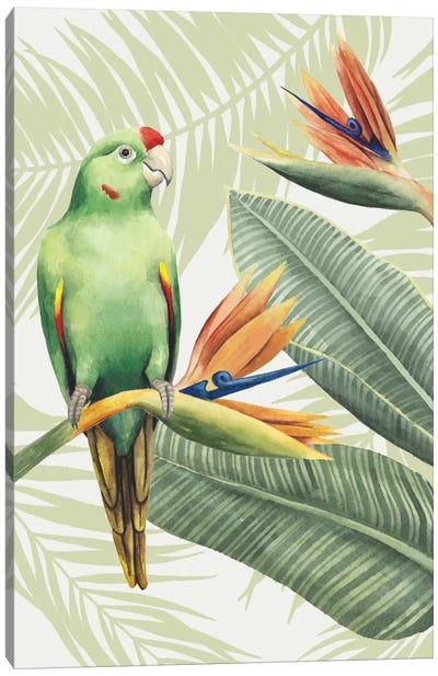 Avian Paradise IV Canvas Art Print