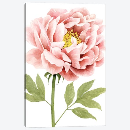 Watercolor Peony I Canvas Print #POP600} by Grace Popp Canvas Wall Art