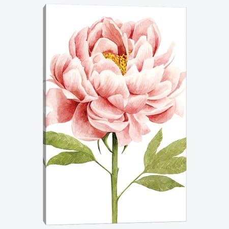 Watercolor Peony II Canvas Print #POP601} by Grace Popp Canvas Wall Art