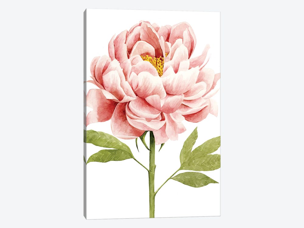 Watercolor Peony II by Grace Popp 1-piece Art Print