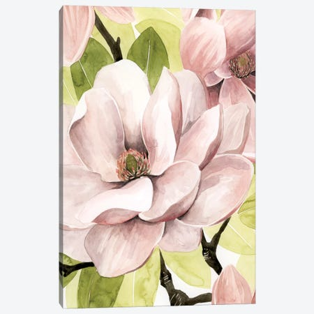 Blush Magnolia II Canvas Print #POP621} by Grace Popp Canvas Art