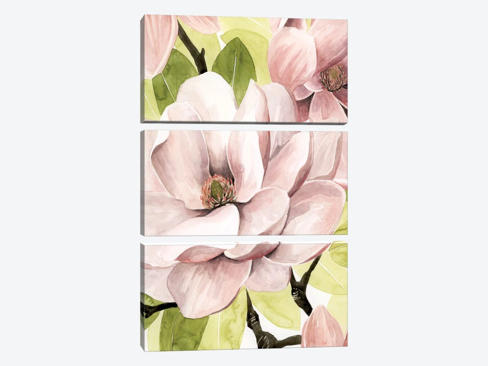 Blush Magnolia II 3-piece Canvas Art Print