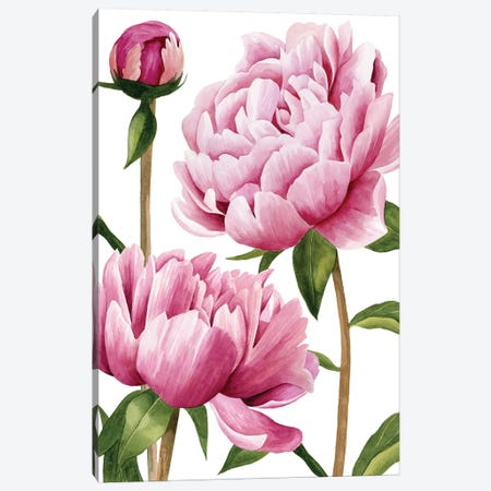 Winsome Peonies I Canvas Print #POP720} by Grace Popp Art Print