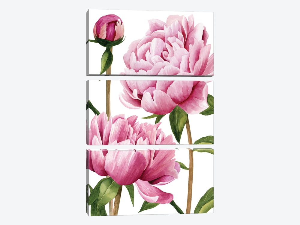 Winsome Peonies I by Grace Popp 3-piece Canvas Art Print