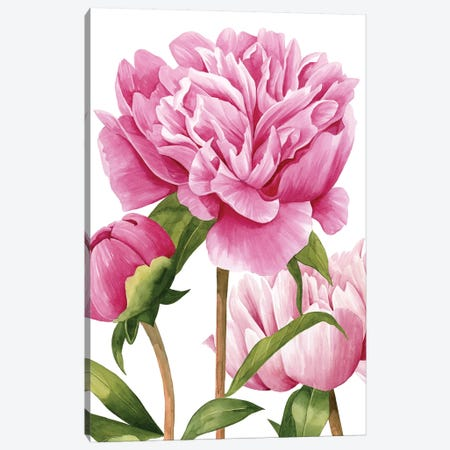 Winsome Peonies II Canvas Print #POP721} by Grace Popp Canvas Art Print