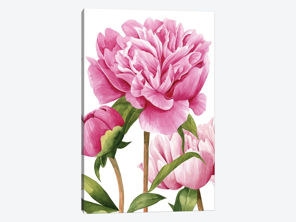 Winsome Peonies II by Grace Popp 1-piece Canvas Artwork